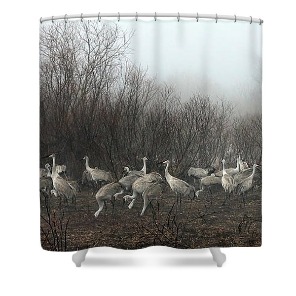 Sandhill Cranes And The Fog Shower Curtain