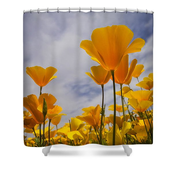 Springtime Poppies  Shower Curtain