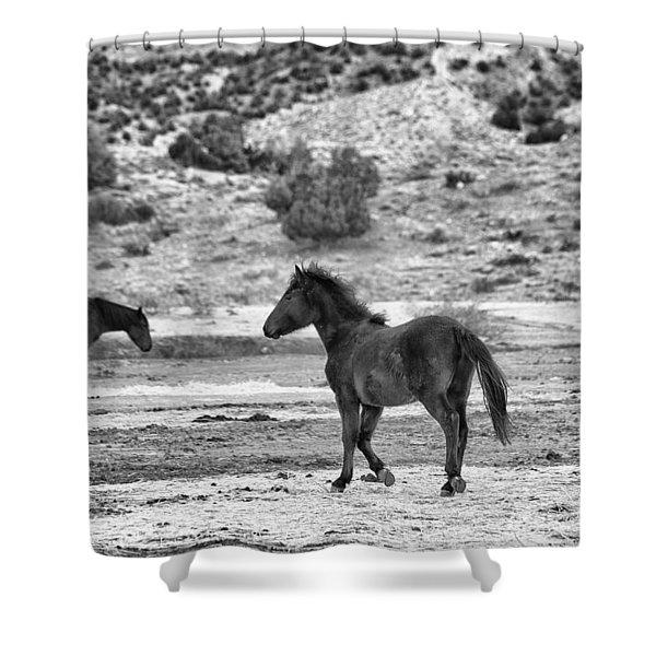 Virginia Range Mustangs Shower Curtain