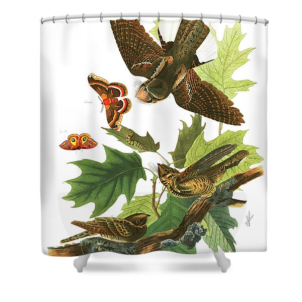 Whip-poor-will Shower Curtain