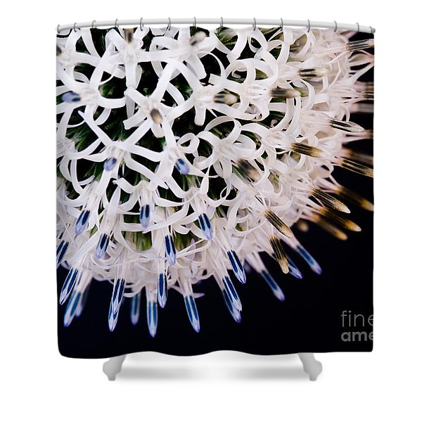 White Alium Onion Flower Shower Curtain
