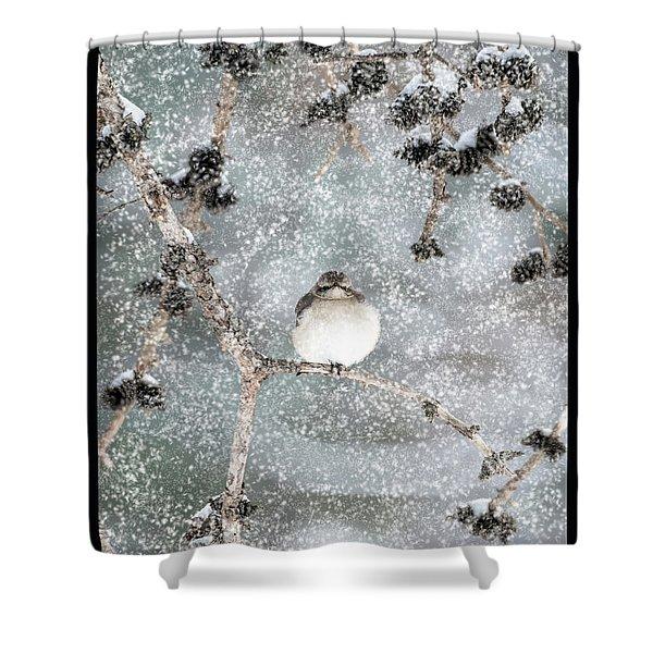 Winter Mockingbird Shower Curtain