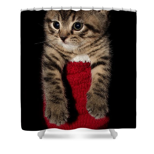 2010 Stocking Cat 2 Shower Curtain