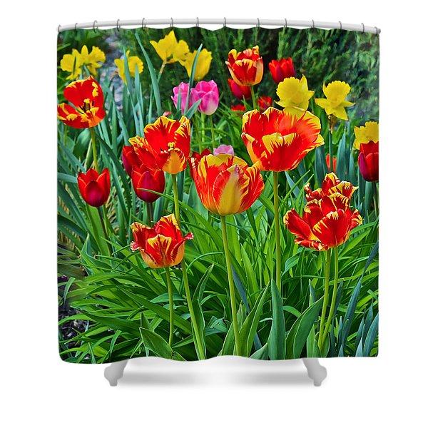 2015 Acewood Tulips 6 Shower Curtain