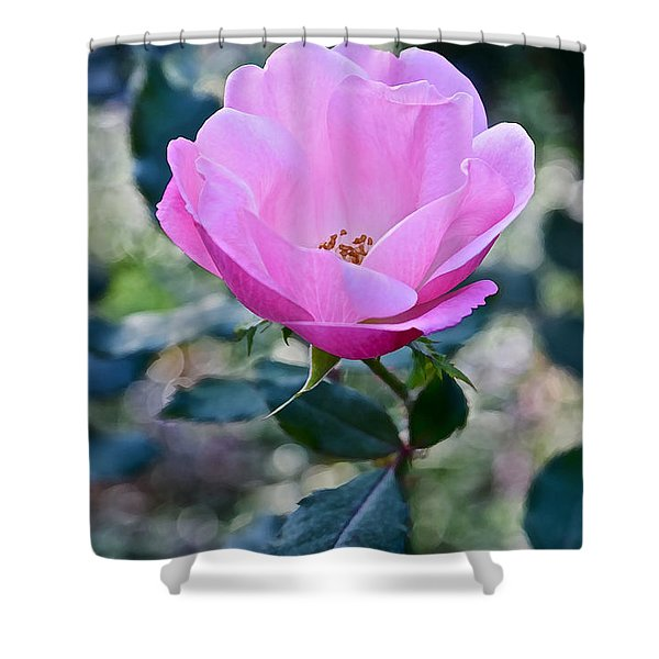 2015 After The Frost At The Garden Pink  Rose Shower Curtain
