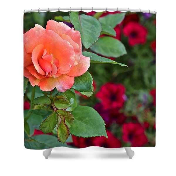 2015 Fall Equinox At The Garden Sunset Rose And Petunias Shower Curtain