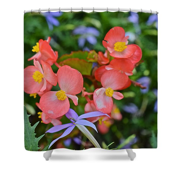 2015 Mid September At The Garden Begonias 2 Shower Curtain