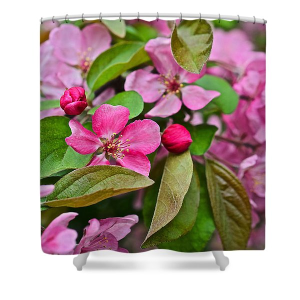 2015 Spring At The Gardens Pink Crabapple Blossoms 2 Shower Curtain