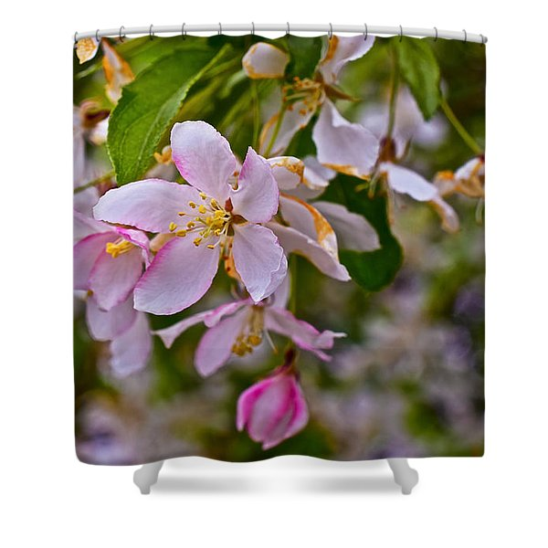 2015 Spring At The Gardens White Crabapple Blossoms 1 Shower Curtain