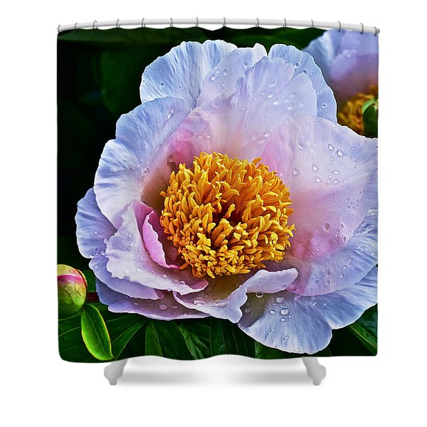 2015 Spring At The Garden White Peony  Shower Curtain