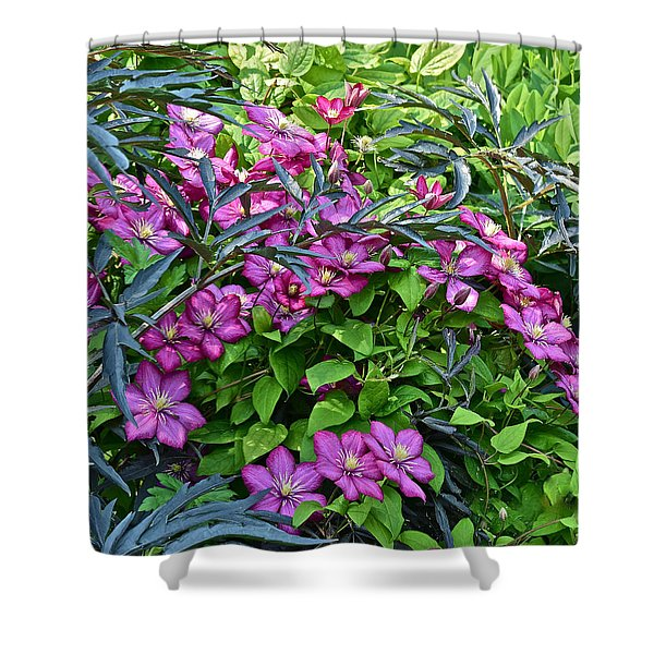 2015 Summer At The Garden Beautiful Clematis Shower Curtain