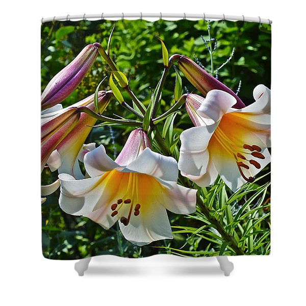 2015 Summer At The Garden Lilies In The Rose Garden 1 Shower Curtain