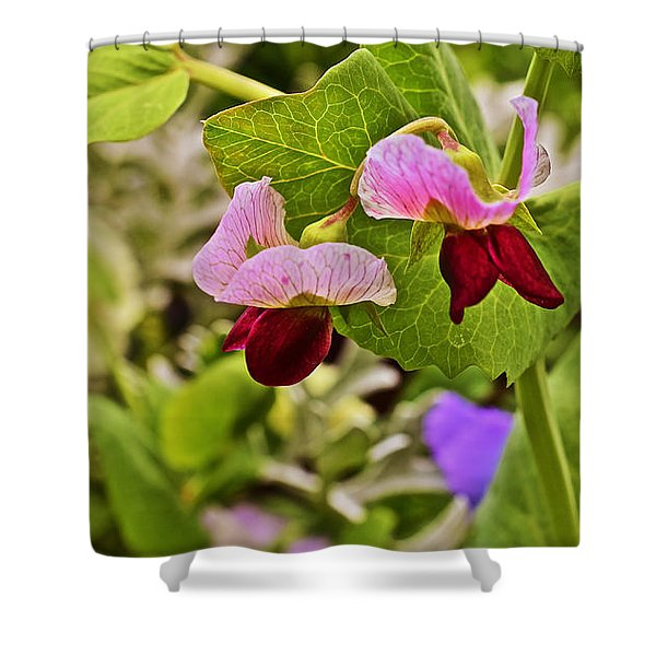 2015 Summer's Eve At The Garden Sweet Pea 2 Shower Curtain