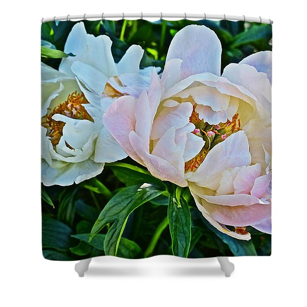 2015 Summer's Eve At The Garden White Peony Duo Shower Curtain