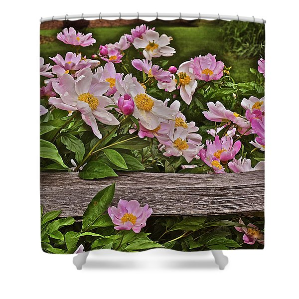 2015 Summer's Eve Front Yard Peonies 1 Shower Curtain