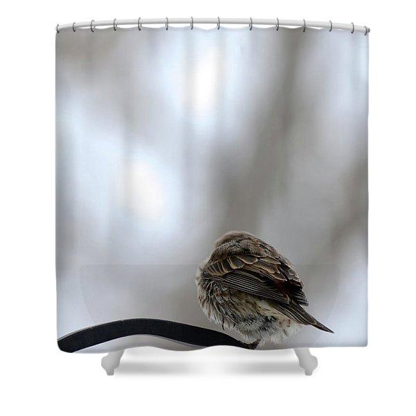 25 Degrees Shower Curtain