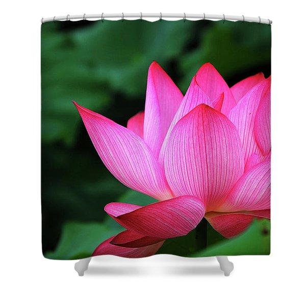 Blossoming Lotus Flower Closeup Shower Curtain