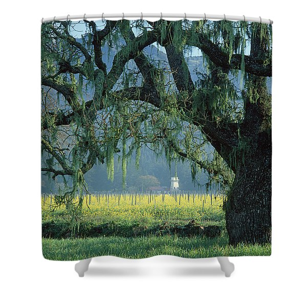2b6319 Mustard In The Oaks Sonoma Ca Shower Curtain
