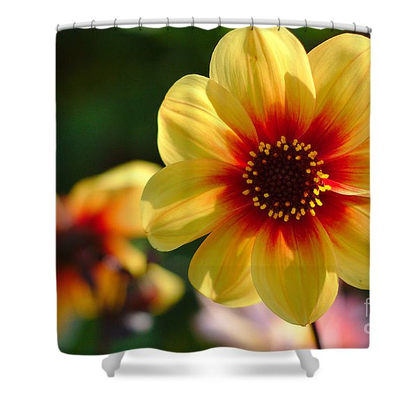 Shower Curtain featuring the photograph Autumn Flowers by Jeremy Hayden