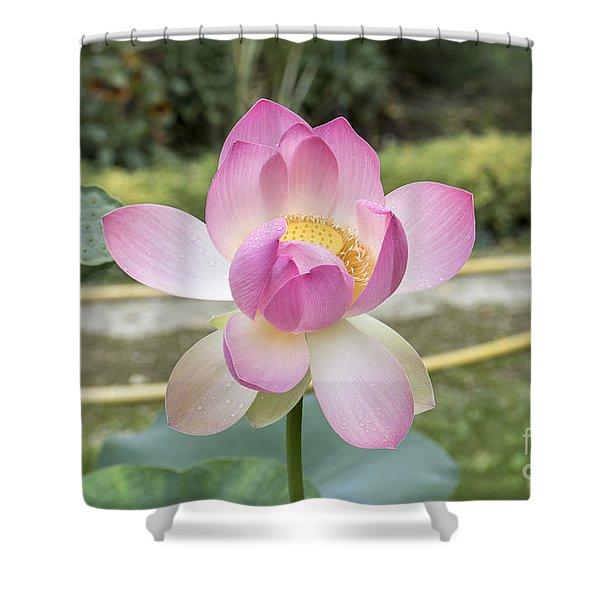 Beautiful Indian Lotus Shower Curtain