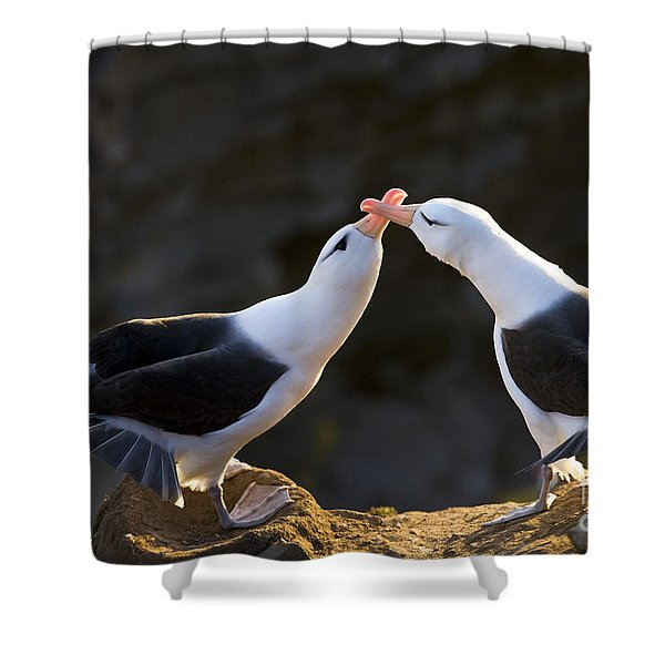 Black-browed Albatross Couple Shower Curtain