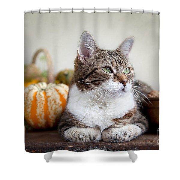 Cat And Pumpkins Shower Curtain
