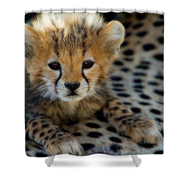 Close-up Of Cheetah Acinonyx Jubatus Shower Curtain