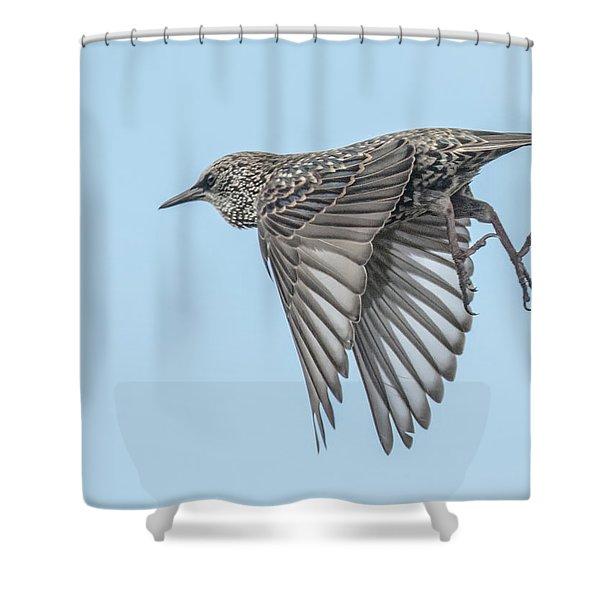 European Starling Shower Curtain