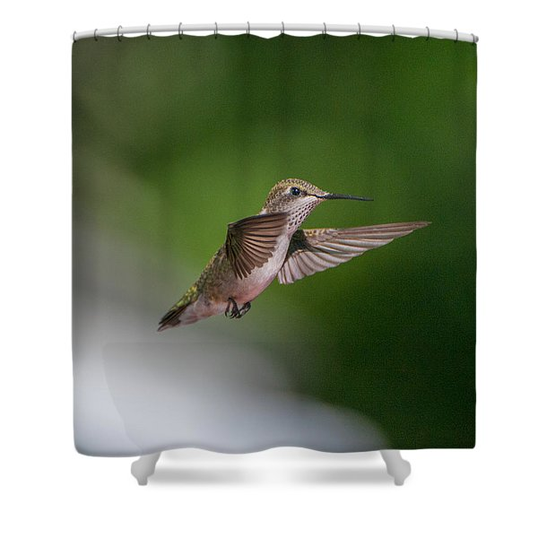 Female Ruby Throated Hummingbird Shower Curtain