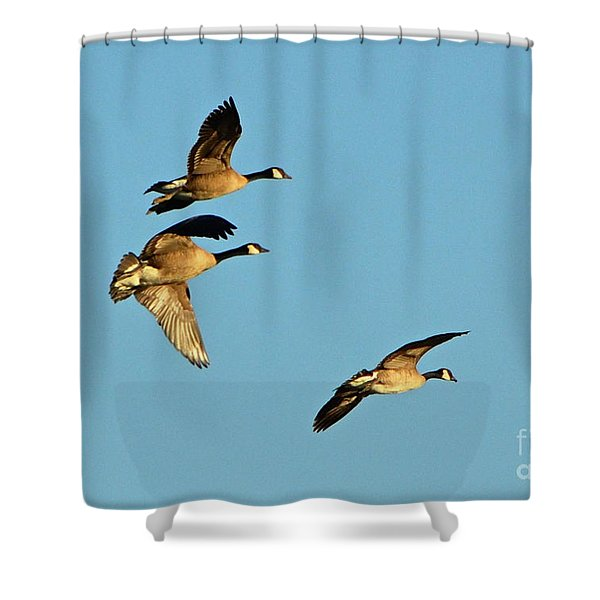3 Geese In Flight Shower Curtain