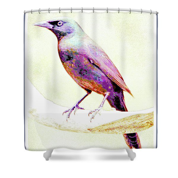 Great-tailed Grackle Shower Curtain