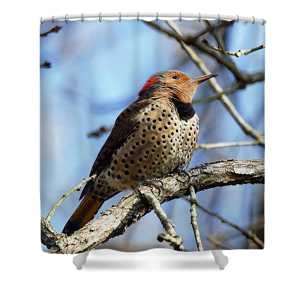 Shower Curtain featuring the photograph Northern Flicker Woodpecker by Robert L Jackson