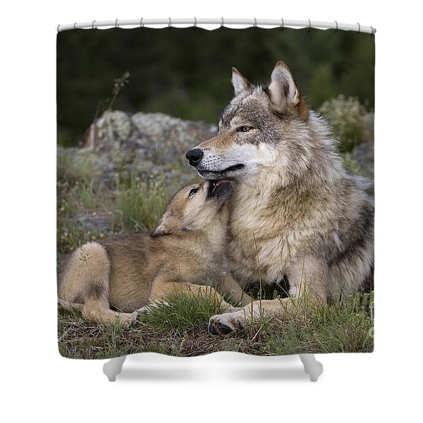 Wolf Cub Begging For Food Shower Curtain