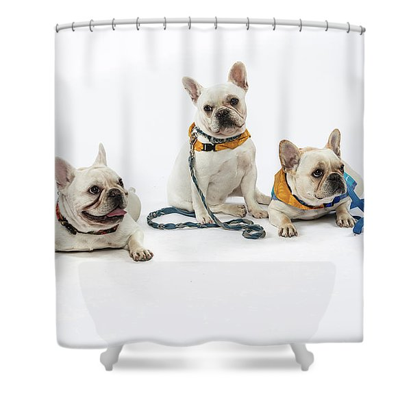 3010.064 Therapet Shower Curtain