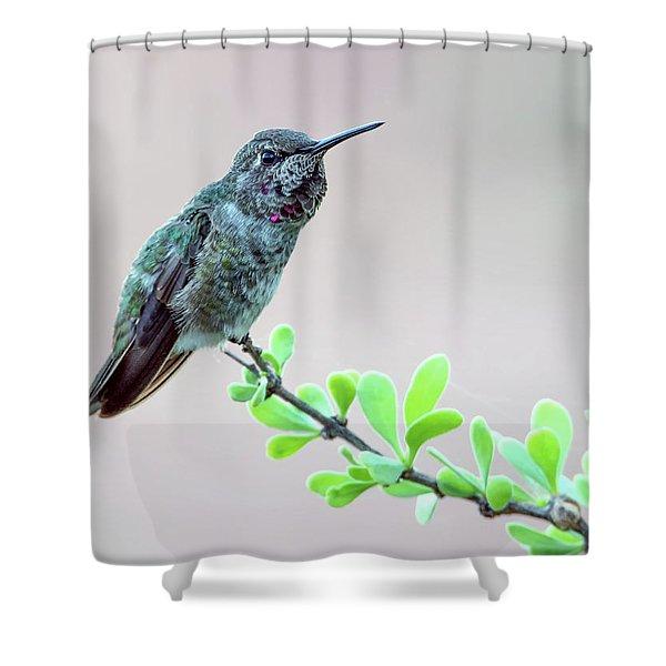 Anna's Hummingbird Shower Curtain