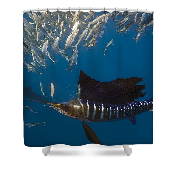 Atlantic Sailfish Istiophorus Albicans Shower Curtain