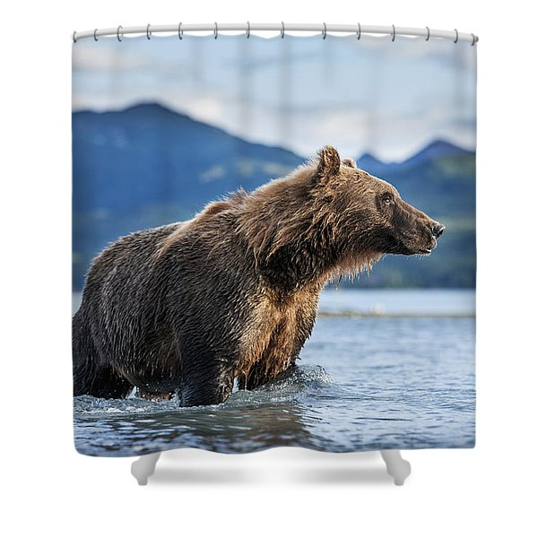 Coastal Brown Bear  Ursus Arctos Shower Curtain