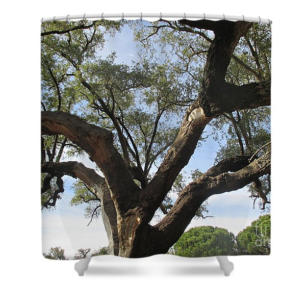 Cork Oak And Pines Shower Curtain