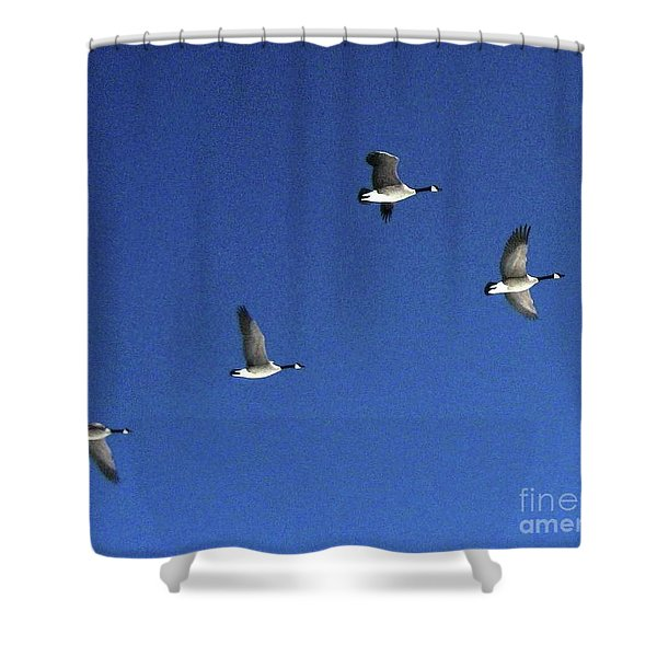 4 Geese In Flight Shower Curtain