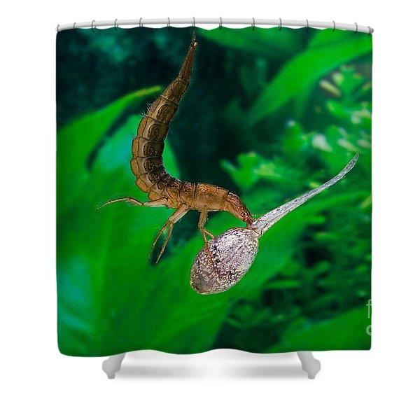 Great Diving Beetle Dytiscus Marginalis Shower Curtain