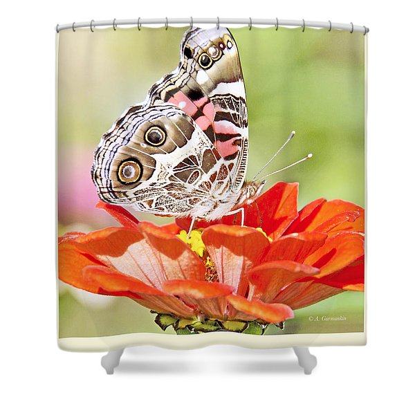Painted Lady Butterfly On Zinnia Flower Shower Curtain