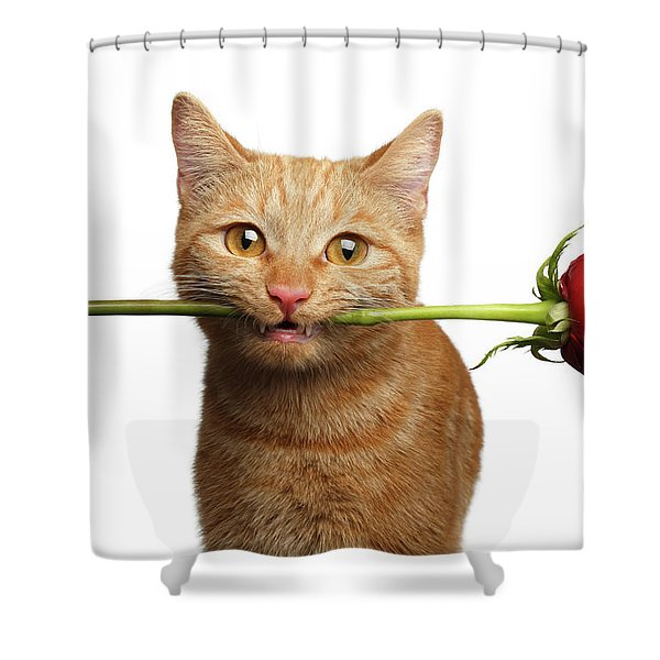 Portrait Of Ginger Cat Brought Rose As A Gift Shower Curtain
