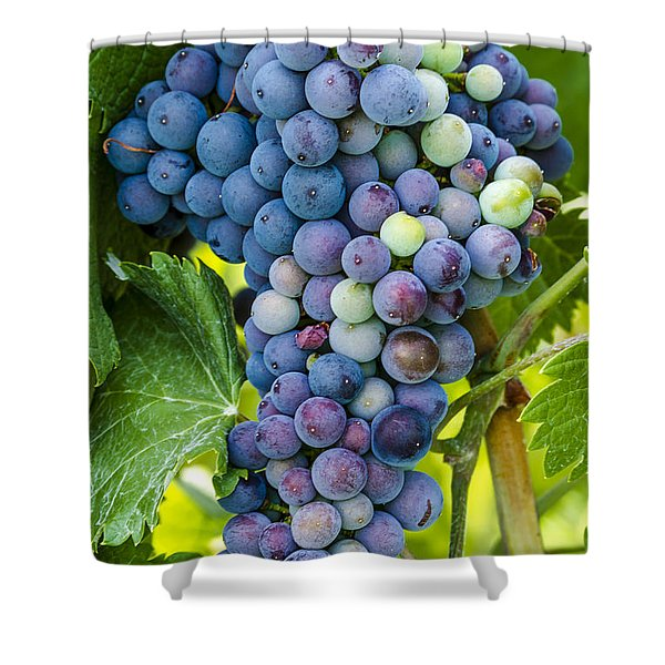 Red Wine Grapes Shower Curtain
