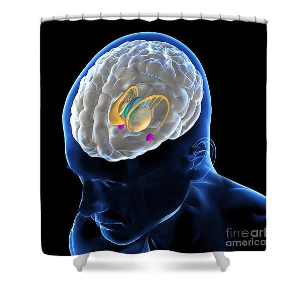 Anatomy Of The Brain Shower Curtain