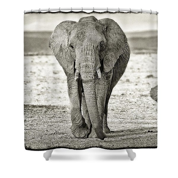 Shower Curtain featuring the photograph African Elephant In The Masai Mara by Perla Copernik
