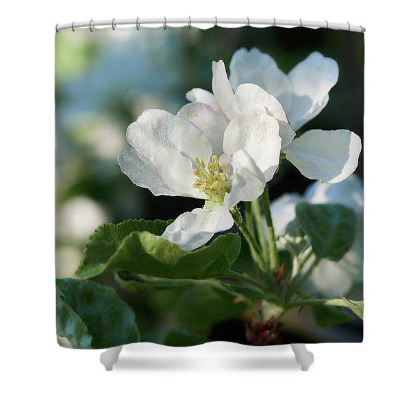 Apple Flowers Shower Curtain