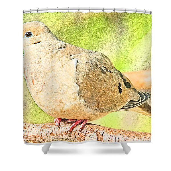 Mourning Dove Animal Portrait Shower Curtain