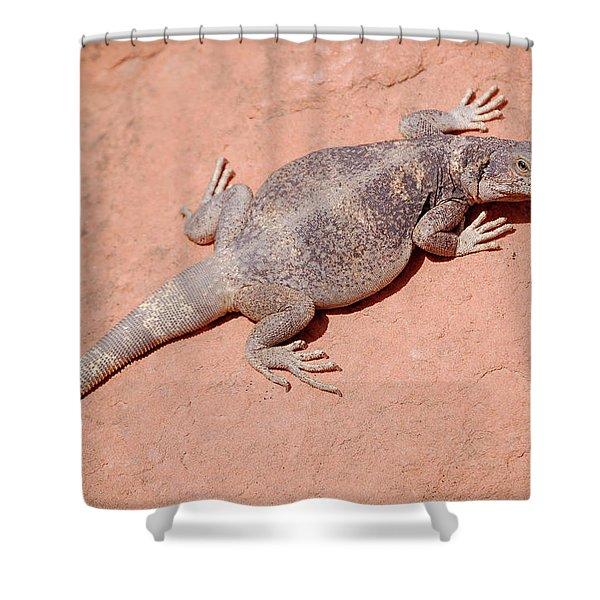 Chuckwalla, Sauromalus Ater Shower Curtain