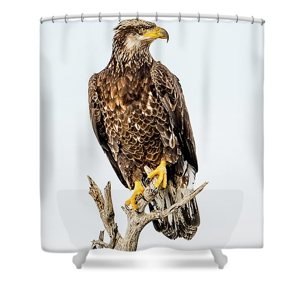 Bald Eagle Shower Curtain