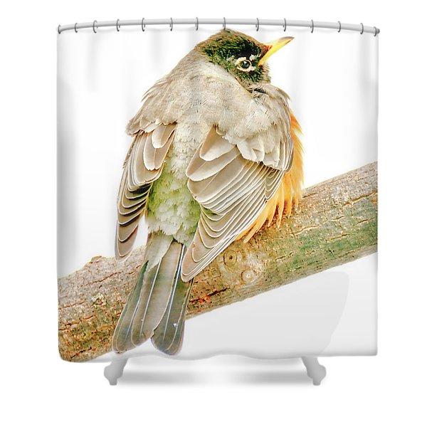American Robin Male, Animal Portrait Shower Curtain